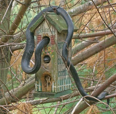 snake crawls in to bird house